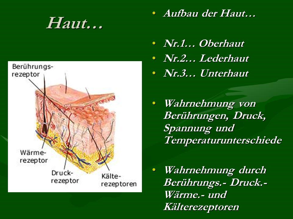 Haut… Aufbau der Haut… Nr.1… Oberhaut Nr.2… Lederhaut Nr.3… Unterhaut
