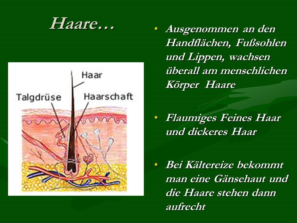 Haare… Ausgenommen an den Handflächen, Fußsohlen und Lippen, wachsen überall am menschlichen Körper Haare.
