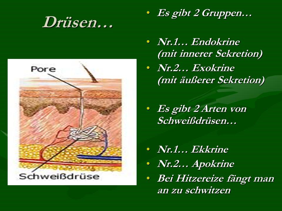 Drüsen… Es gibt 2 Gruppen… Nr.1… Endokrine (mit innerer Sekretion)