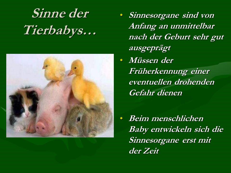 Sinne der Tierbabys… Sinnesorgane sind von Anfang an unmittelbar nach der Geburt sehr gut ausgeprägt.