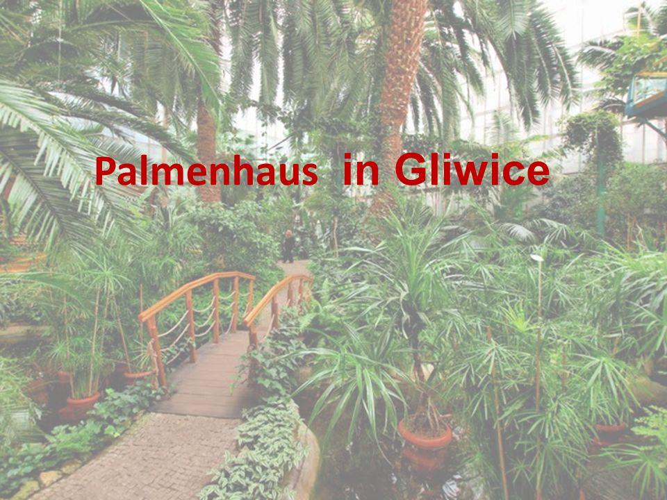 Palmenhaus in Gliwice