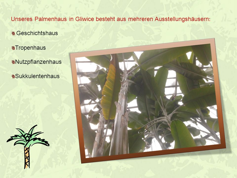 Unseres Palmenhaus in Gliwice besteht aus mehreren Ausstellungshäusern: