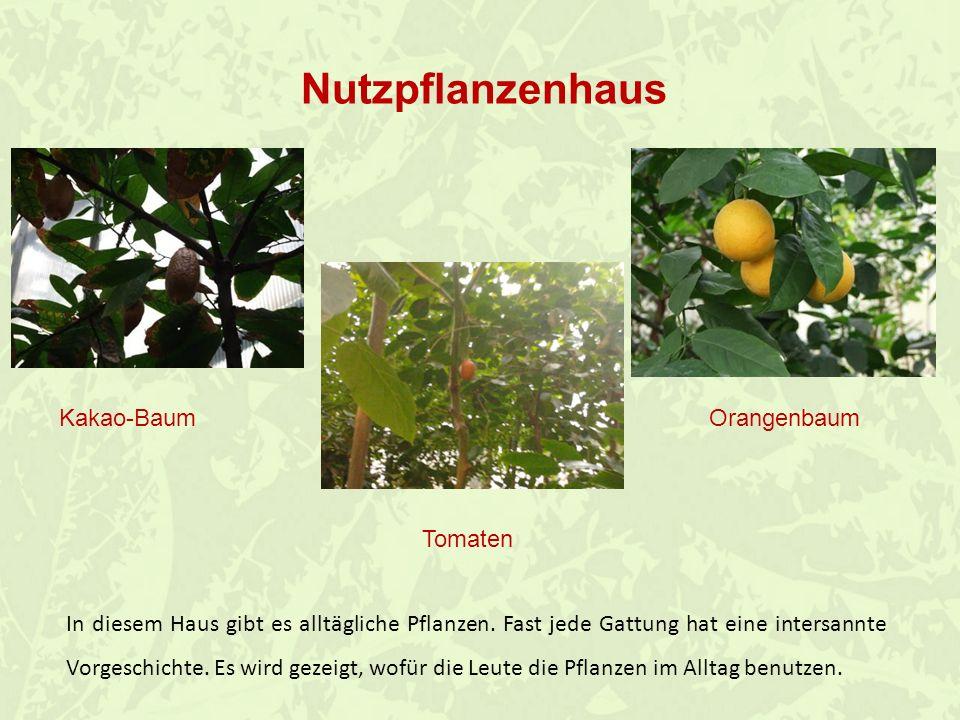 Nutzpflanzenhaus Kakao-Baum Orangenbaum Tomaten