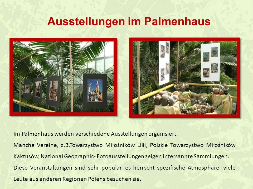 Ausstellungen im Palmenhaus