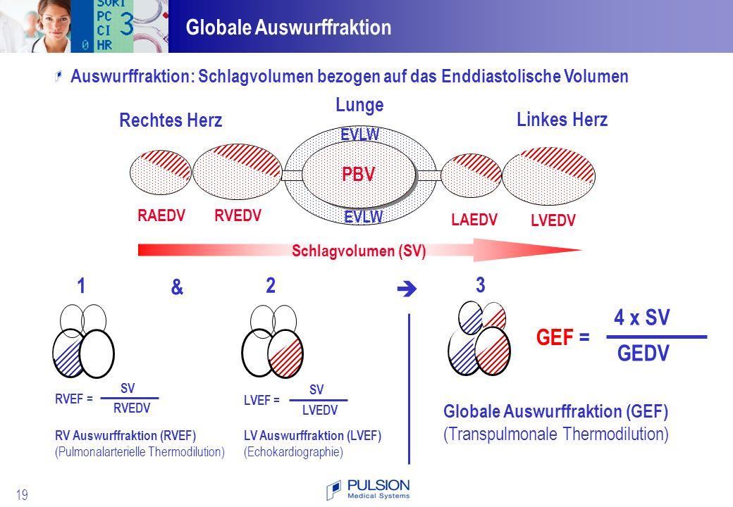 4 x SV GEF = GEDV Globale Auswurffraktion 1 3 & 2  Lunge Rechtes Herz