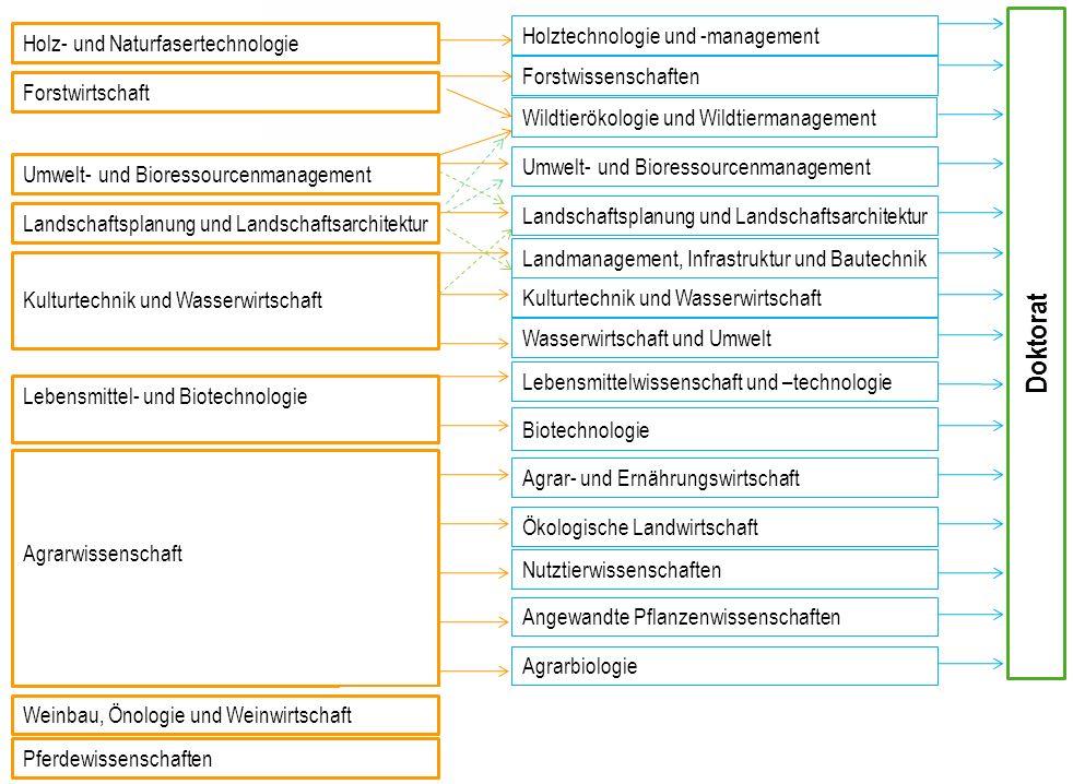 Doktorat Holztechnologie und -management
