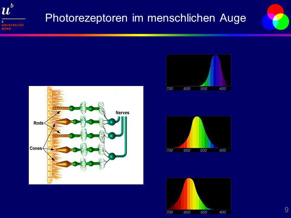 Photorezeptoren im menschlichen Auge