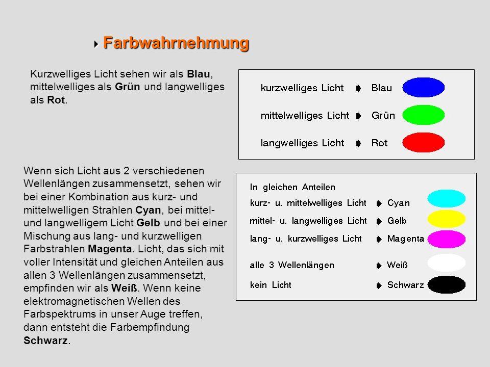  Farbwahrnehmung Kurzwelliges Licht sehen wir als Blau, mittelwelliges als Grün und langwelliges als Rot.