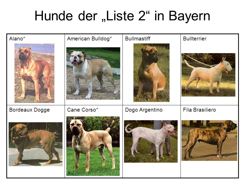 """Hunde der """"Liste 2 in Bayern"""