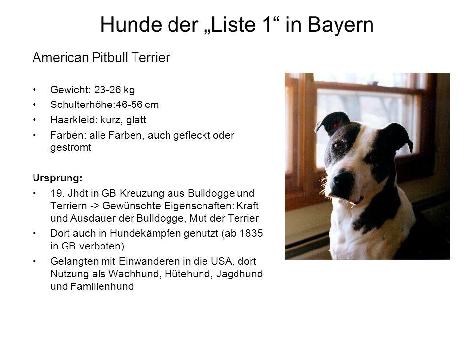 """Hunde der """"Liste 1 in Bayern"""