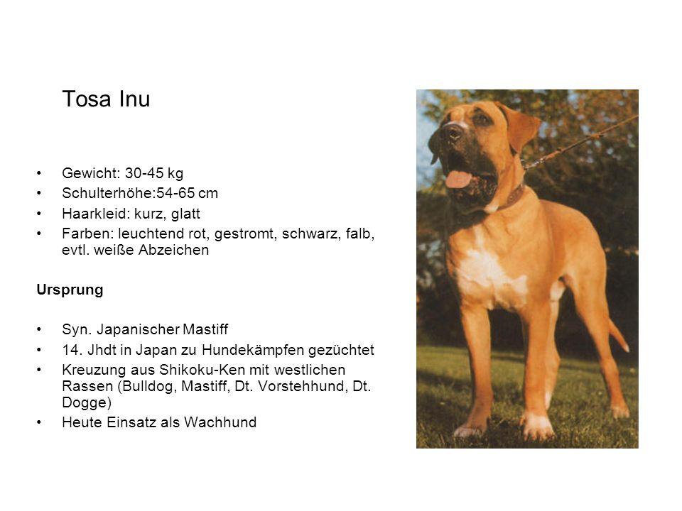 Tosa Inu Gewicht: 30-45 kg Schulterhöhe:54-65 cm