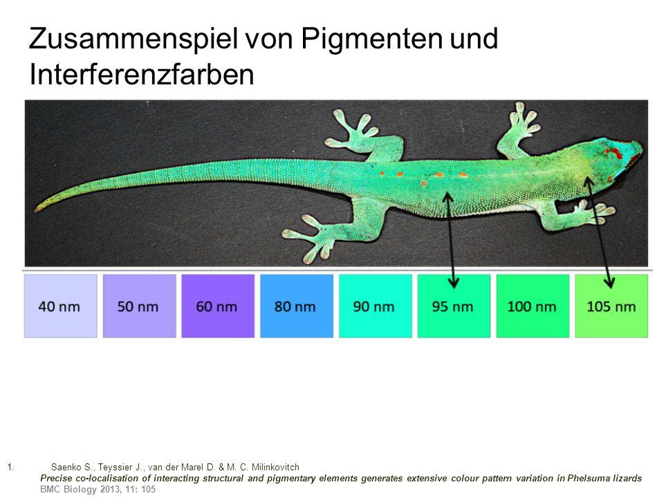 Zusammenspiel von Pigmenten und Interferenzfarben
