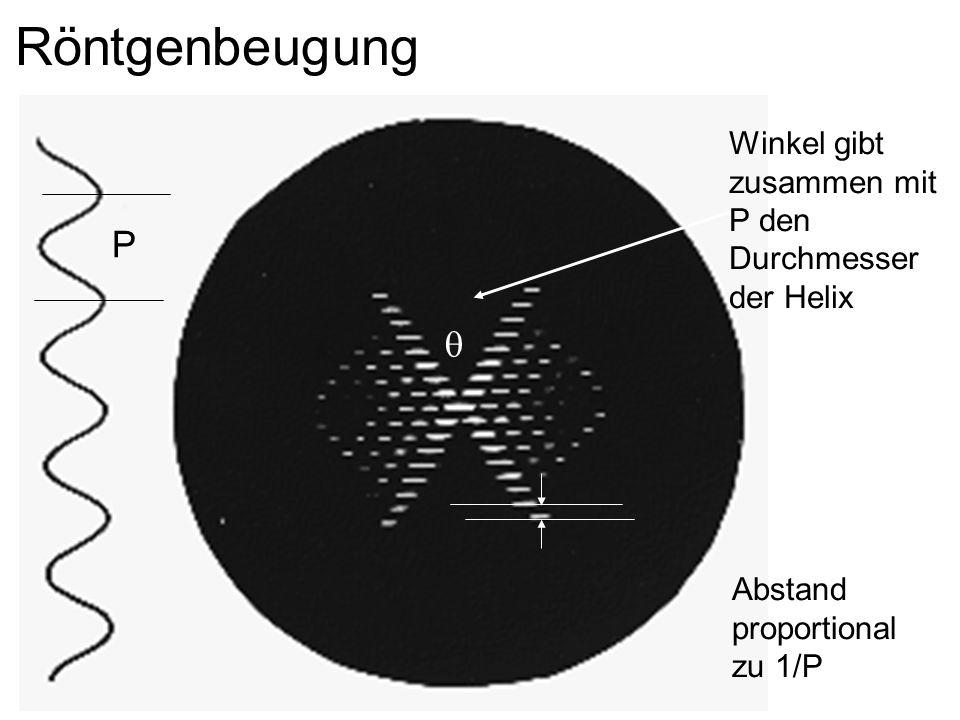 Röntgenbeugung Winkel gibt zusammen mit P den Durchmesser der Helix P q Abstand proportional zu 1/P