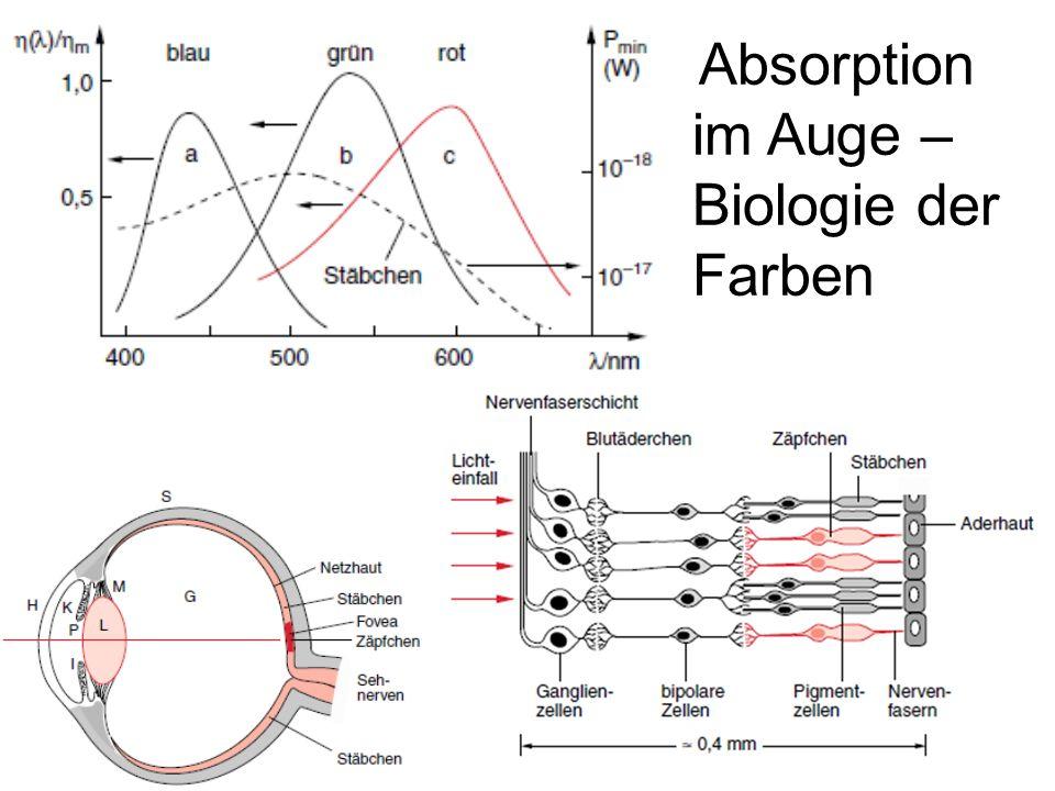 Absorption im Auge – Biologie der Farben