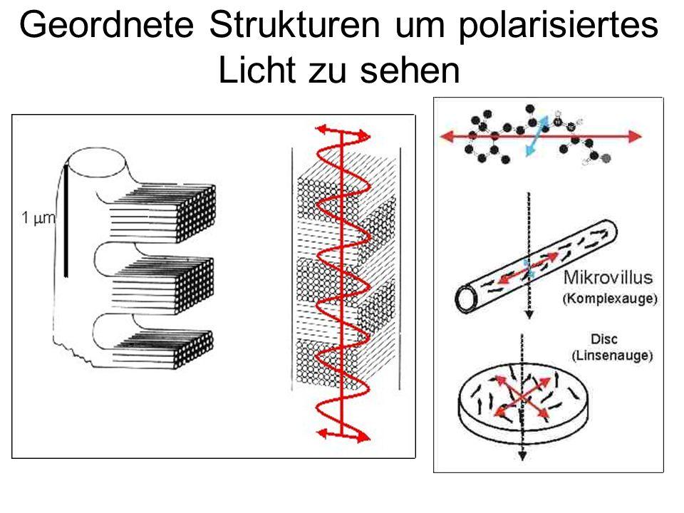 Geordnete Strukturen um polarisiertes Licht zu sehen