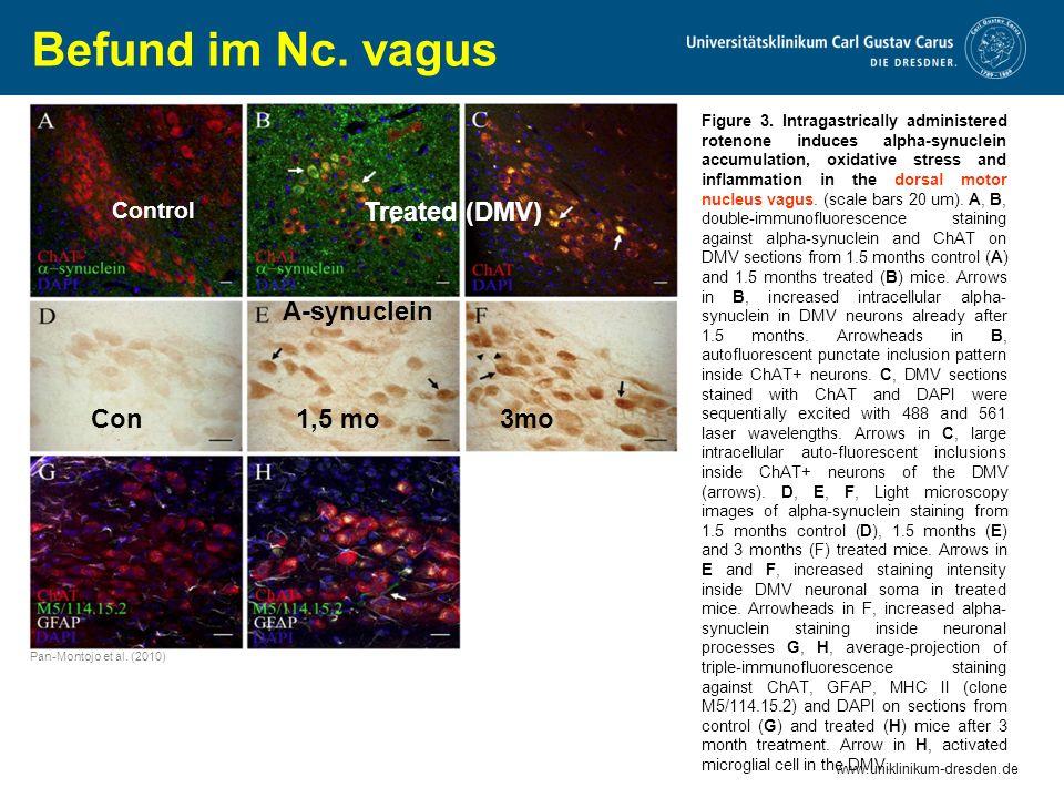 Befund im Nc. vagus Treated (DMV) A-synuclein Con 1,5 mo 3mo Control