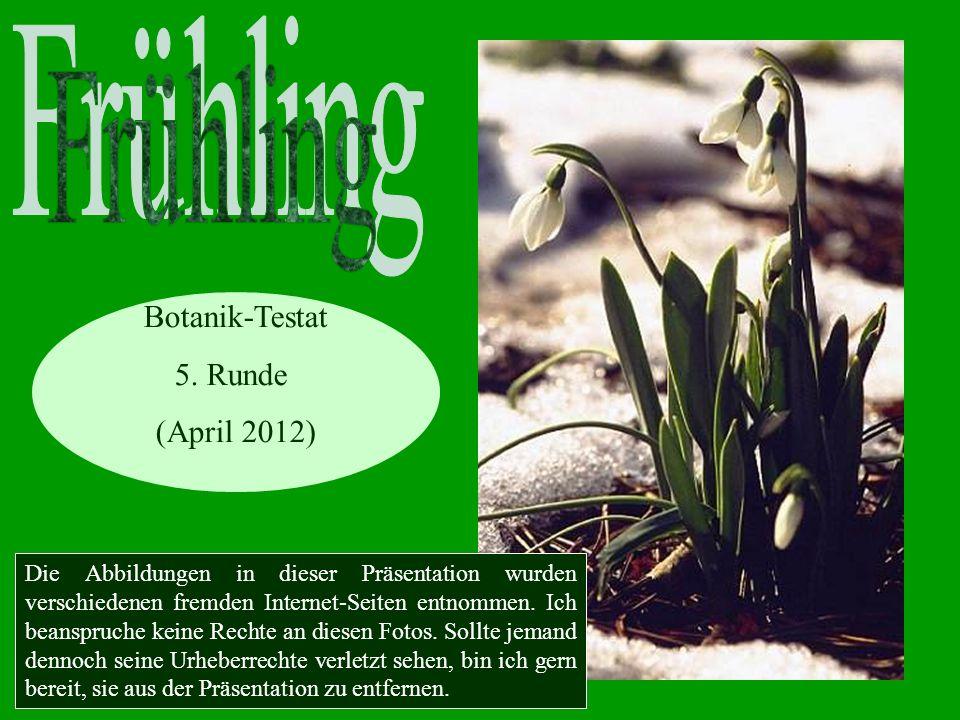Frühling Botanik-Testat 5. Runde (April 2012)