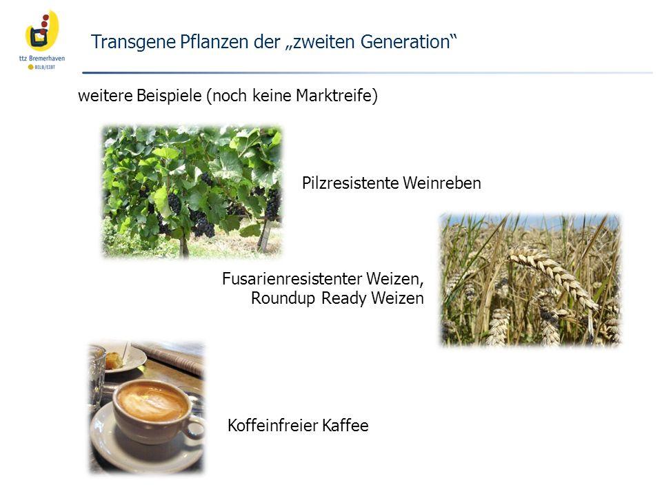 """Transgene Pflanzen der """"zweiten Generation"""