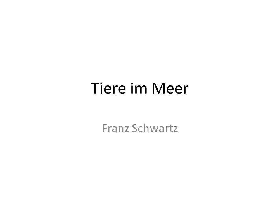 Tiere im Meer Franz Schwartz