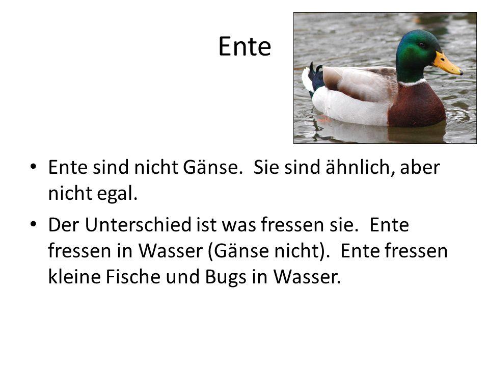 Ente Ente sind nicht Gänse. Sie sind ähnlich, aber nicht egal.