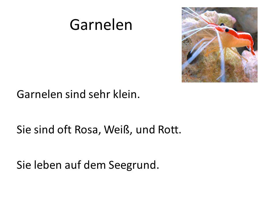 Garnelen Garnelen sind sehr klein. Sie sind oft Rosa, Weiß, und Rott. Sie leben auf dem Seegrund.