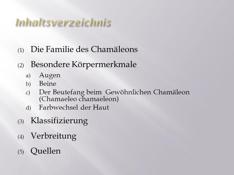 Inhaltsverzeichnis Die Familie des Chamäleons Besondere Körpermerkmale