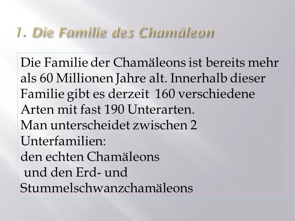 1. Die Familie des Chamäleon