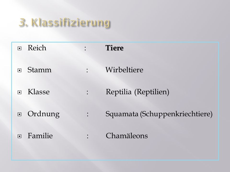 3. Klassifizierung Reich : Tiere Stamm : Wirbeltiere