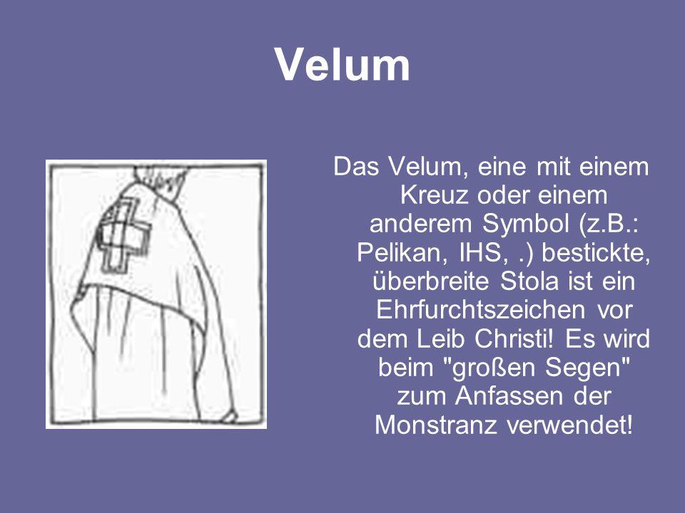 Velum