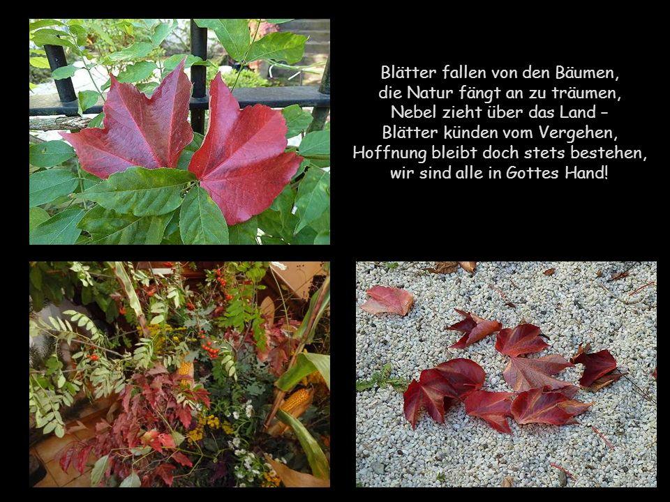Blätter fallen von den Bäumen, die Natur fängt an zu träumen, Nebel zieht über das Land – Blätter künden vom Vergehen, Hoffnung bleibt doch stets bestehen, wir sind alle in Gottes Hand!