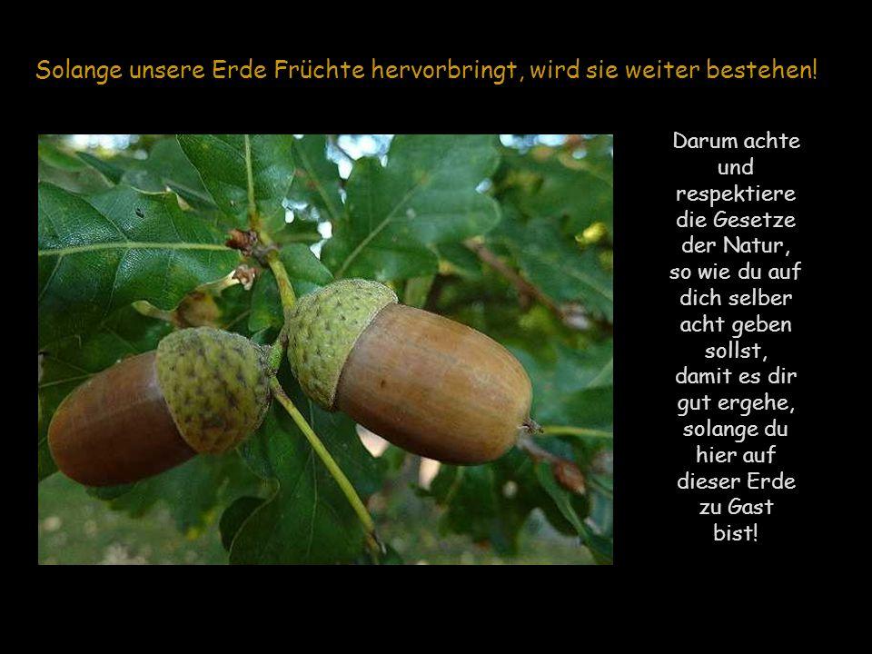 Solange unsere Erde Früchte hervorbringt, wird sie weiter bestehen!