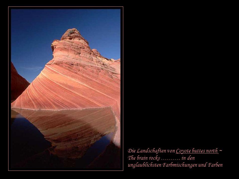 Die Landschaften von Coyote buttes north ~