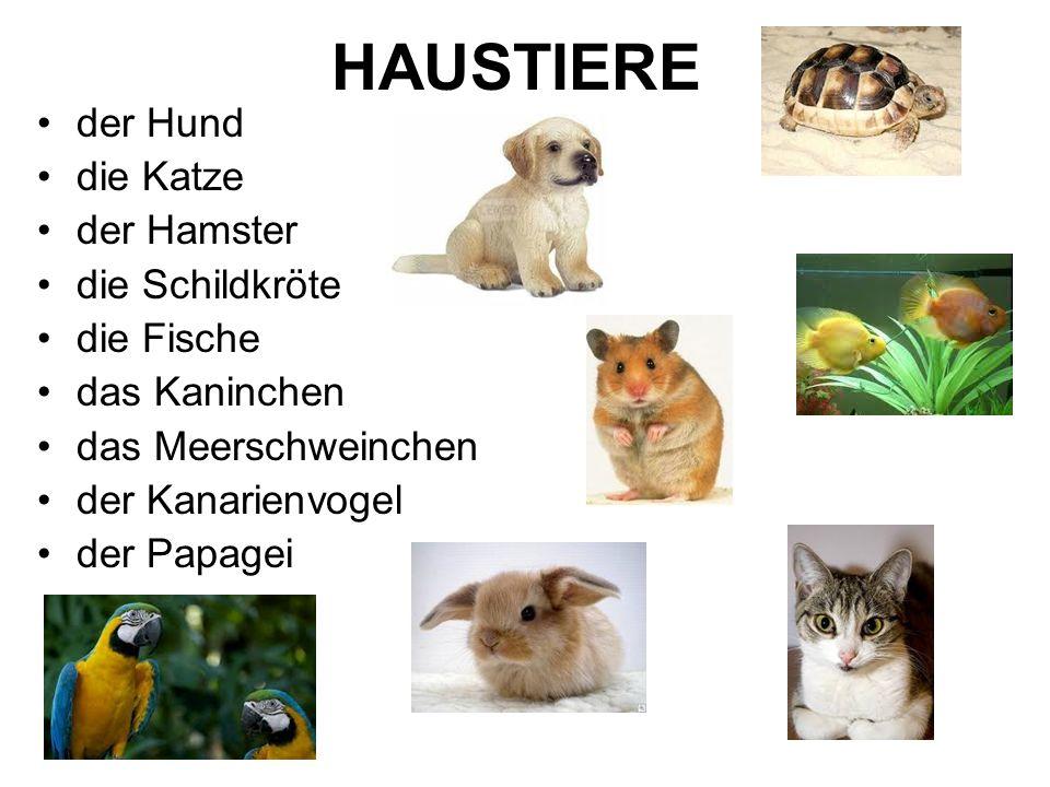 HAUSTIERE der Hund die Katze der Hamster die Schildkröte die Fische