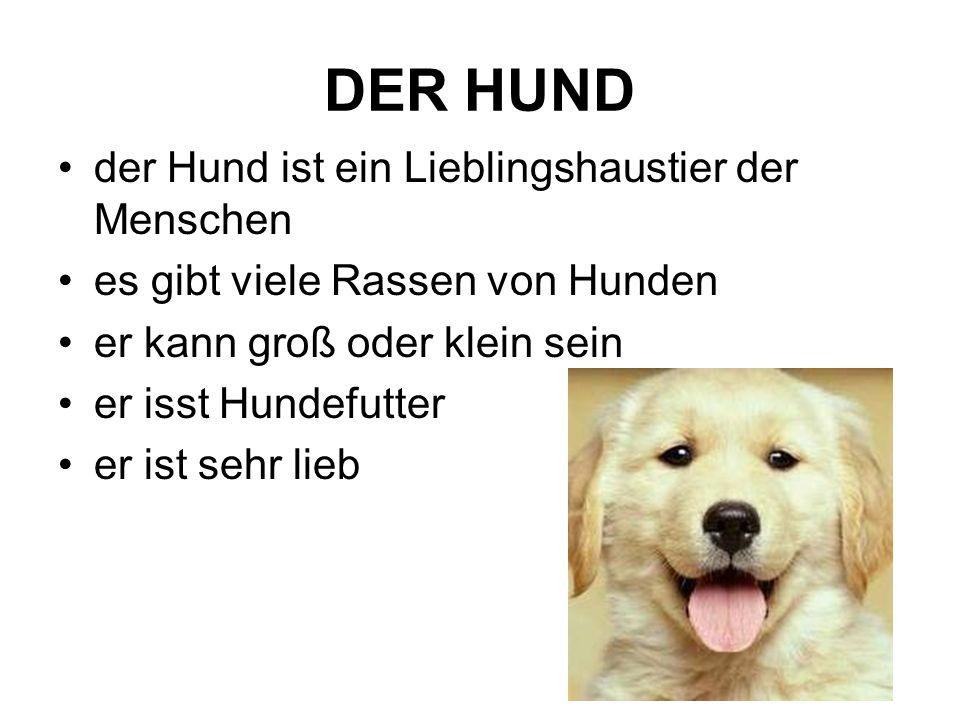 DER HUND der Hund ist ein Lieblingshaustier der Menschen