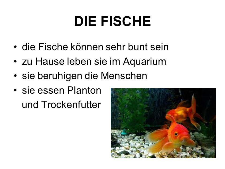 DIE FISCHE die Fische können sehr bunt sein