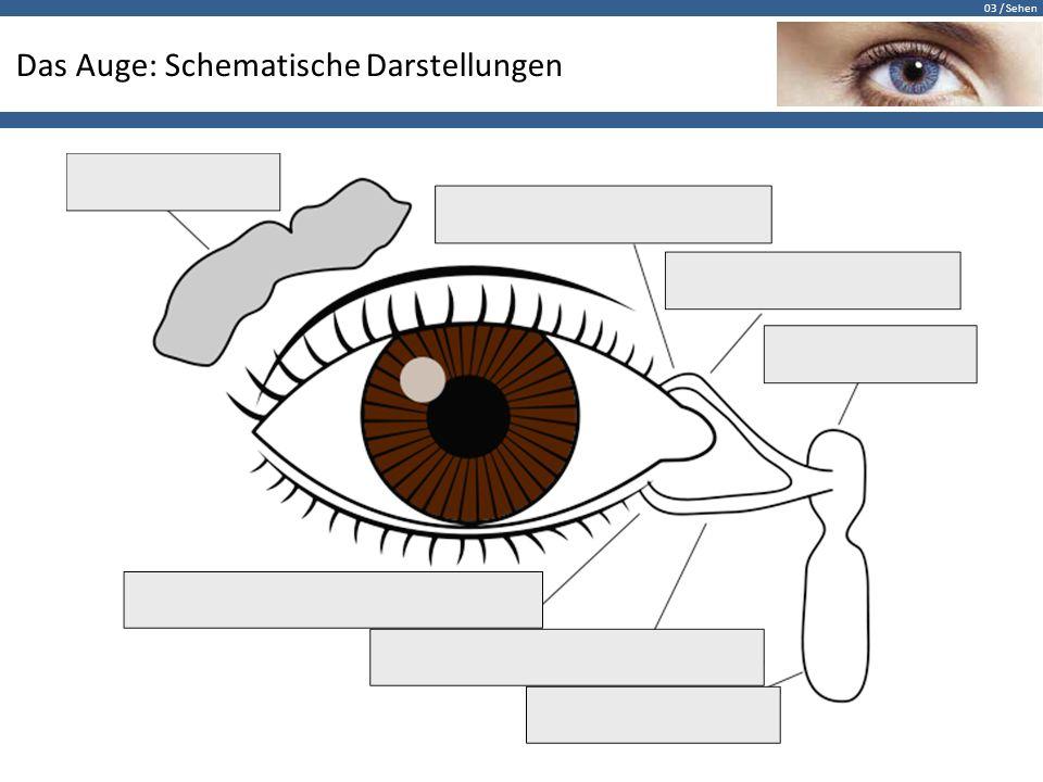 Das Auge: Schematische Darstellungen