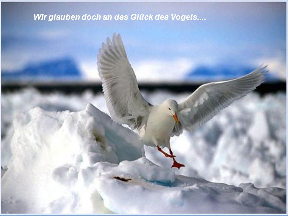 Wir glauben doch an das Glück des Vogels....