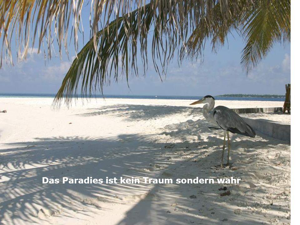 Das Paradies ist kein Traum sondern wahr