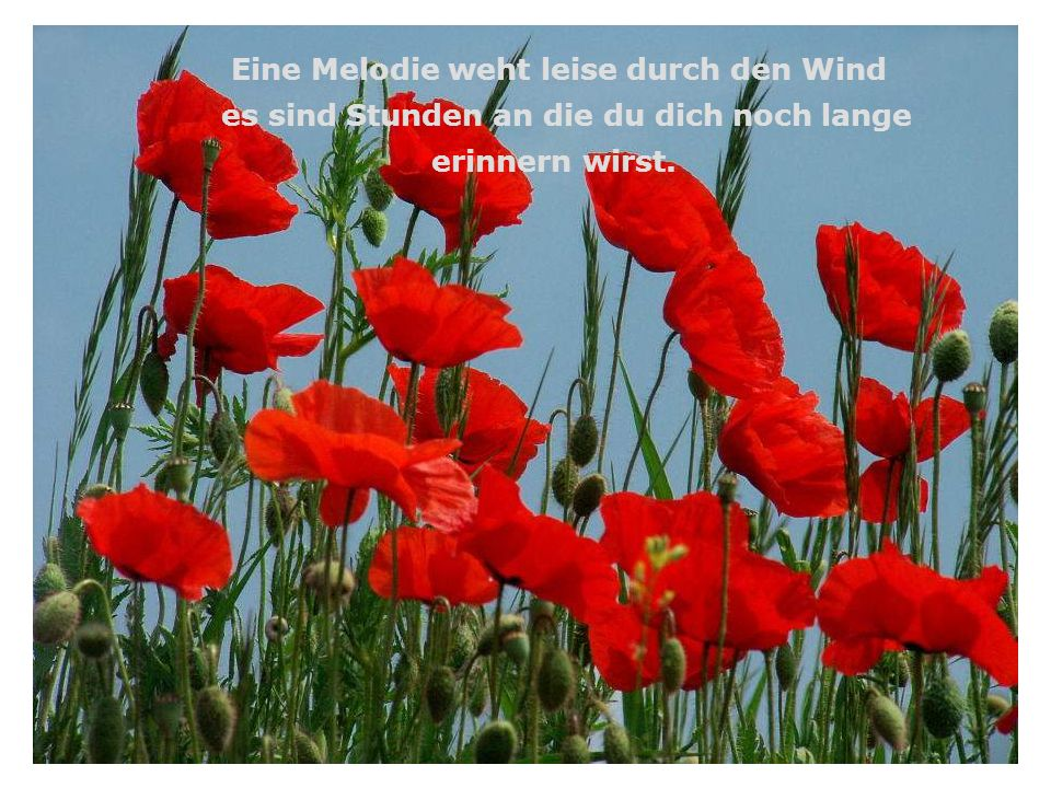 Eine Melodie weht leise durch den Wind