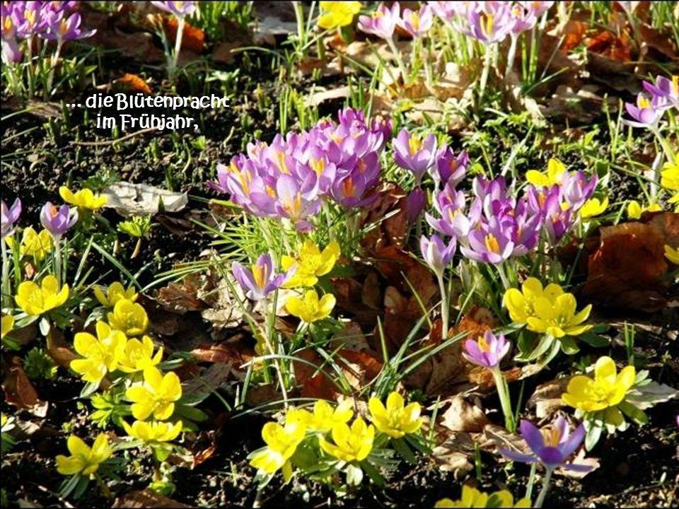 ... die Blütenpracht im Frühjahr,