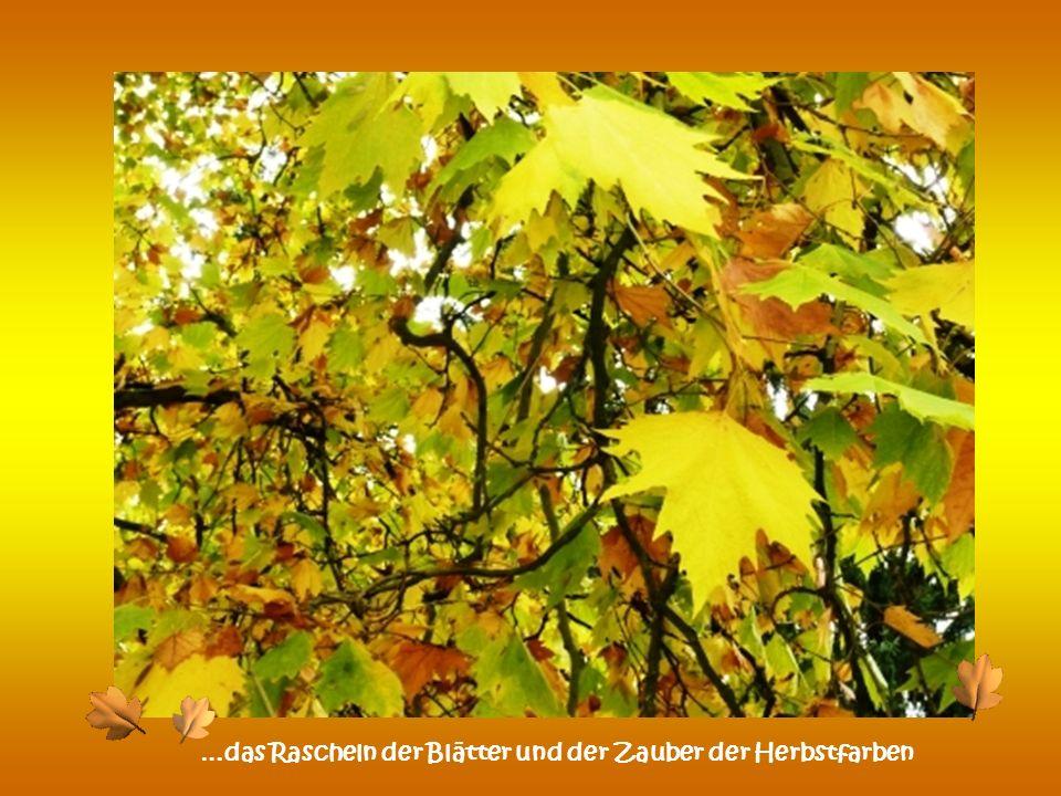 …das Rascheln der Blätter und der Zauber der Herbstfarben