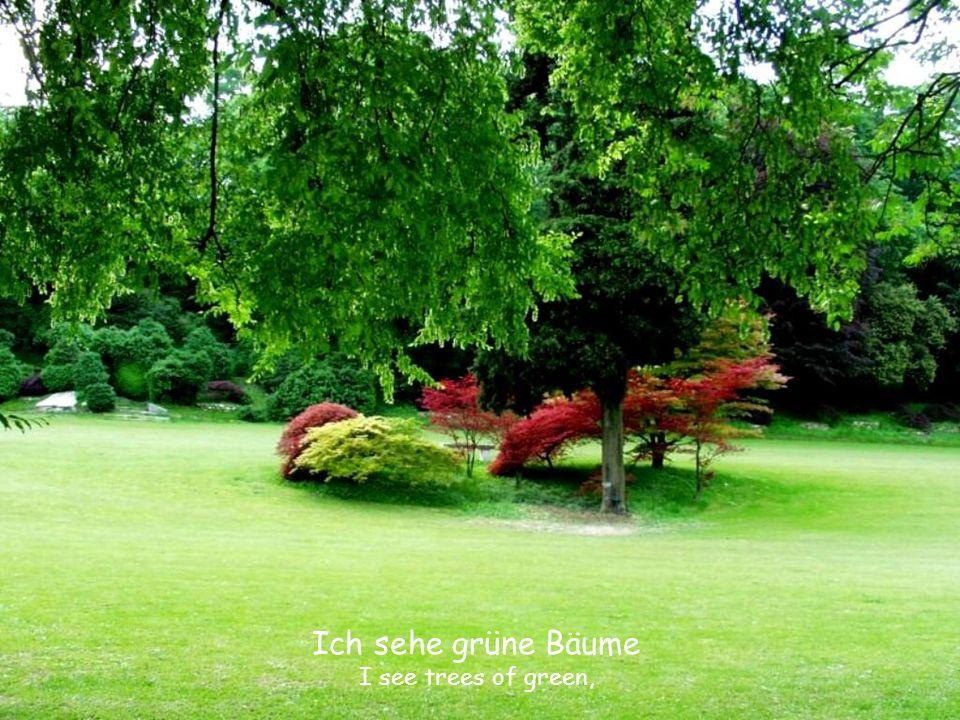 Ich sehe grüne Bäume I see trees of green,