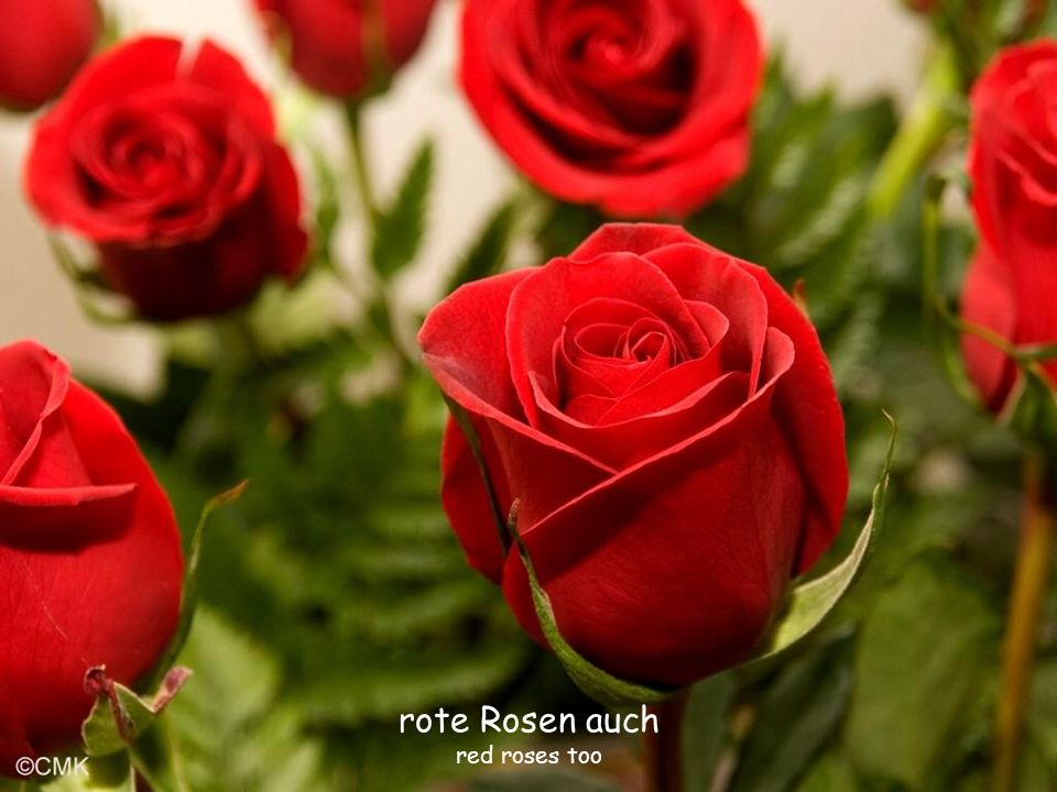 rote Rosen auch red roses too