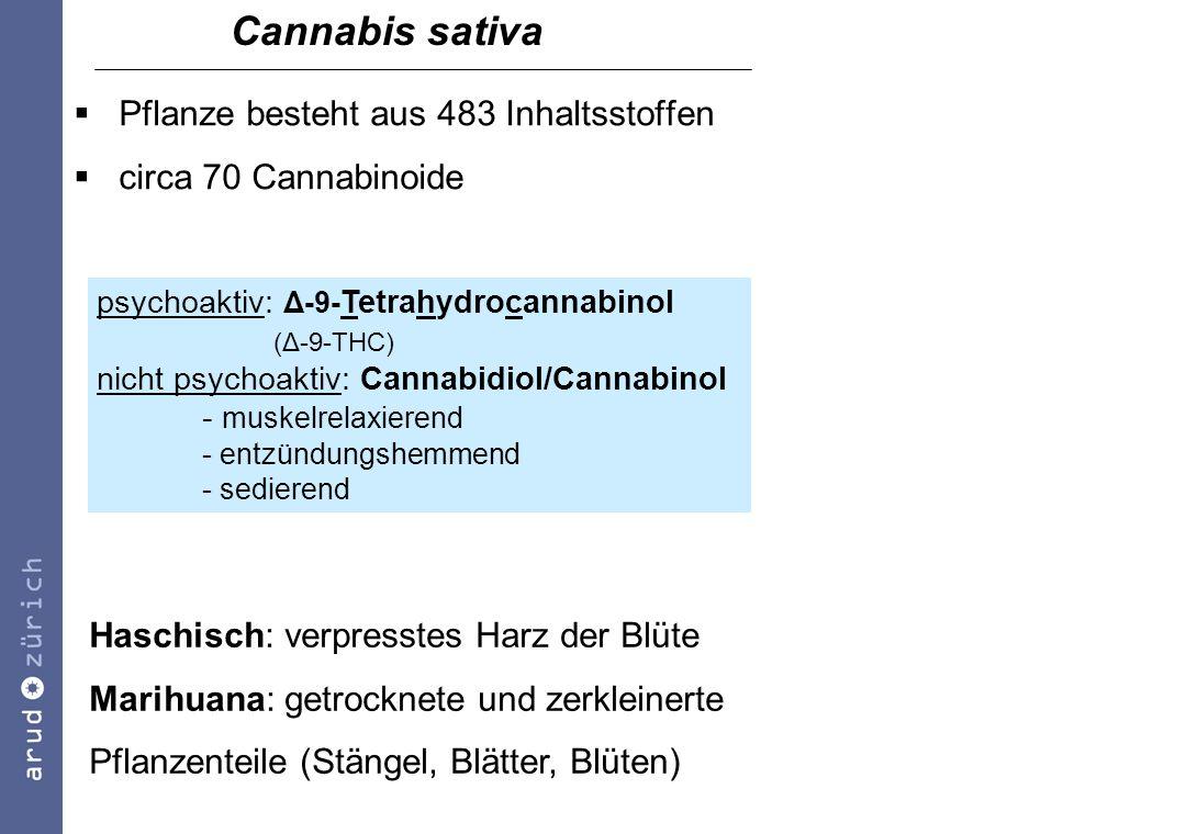 Cannabis sativa Pflanze besteht aus 483 Inhaltsstoffen