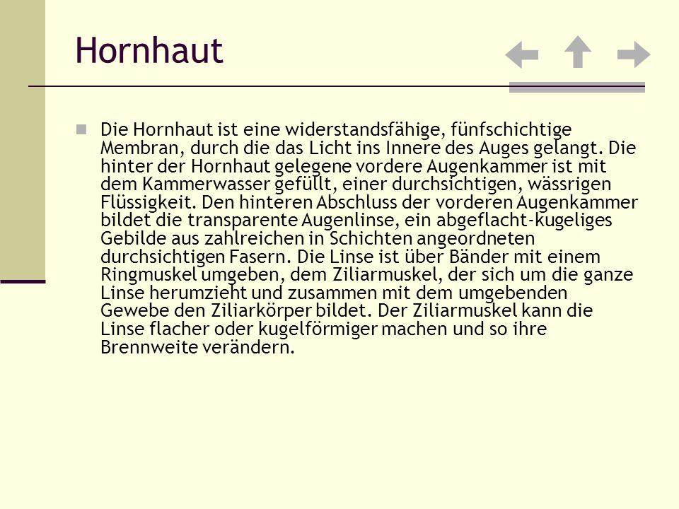 Hornhaut
