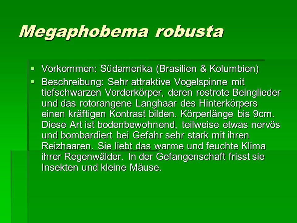 Megaphobema robusta Vorkommen: Südamerika (Brasilien & Kolumbien)