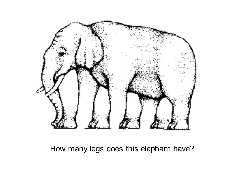 How many legs does this elephant have