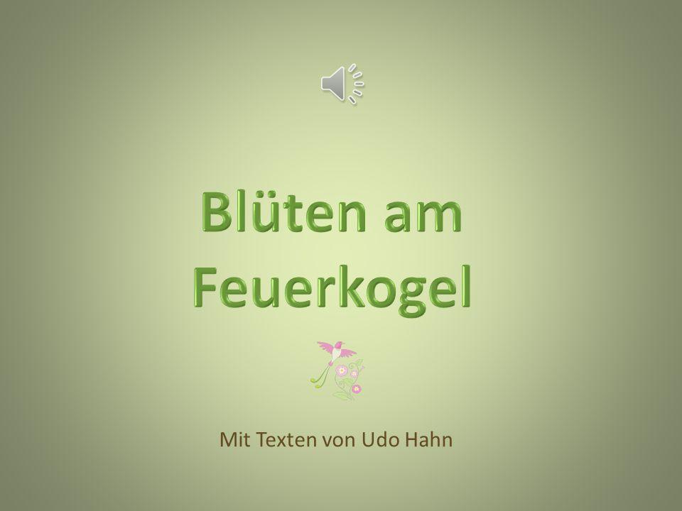 Blüten am Feuerkogel Mit Texten von Udo Hahn