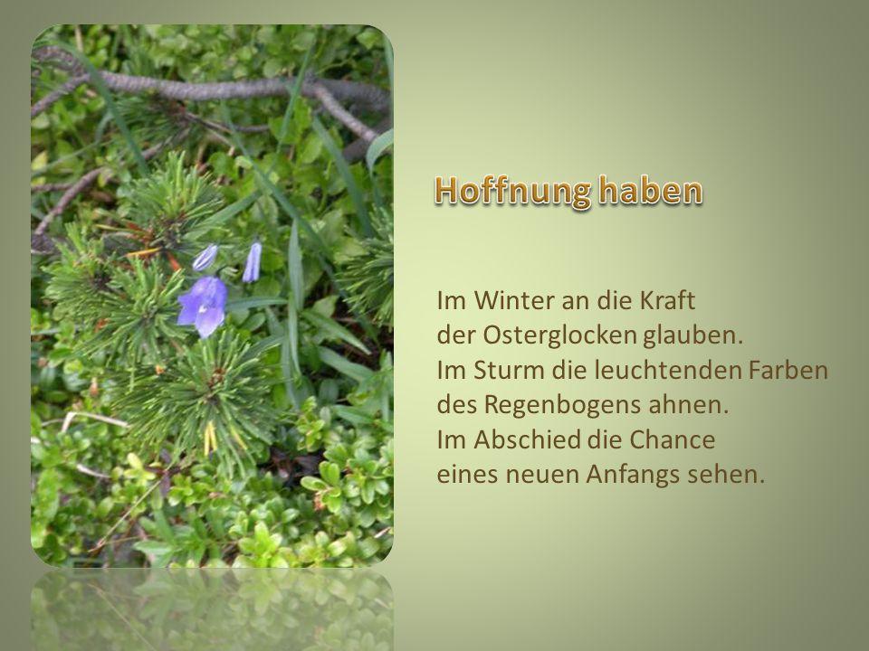 Hoffnung haben Im Winter an die Kraft der Osterglocken glauben.