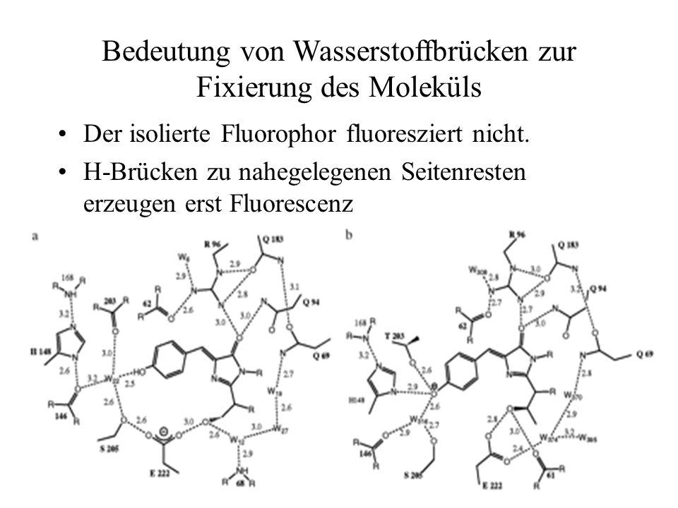 Bedeutung von Wasserstoffbrücken zur Fixierung des Moleküls